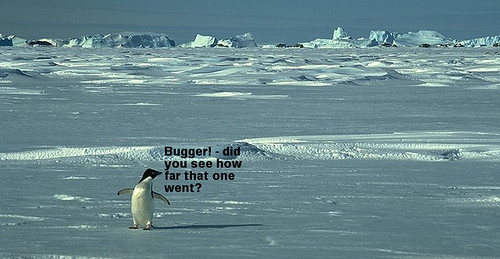 Penguin poo2