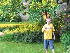 Backyard cherries
