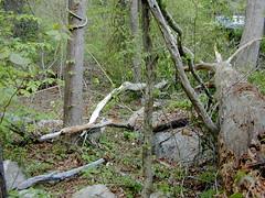 05.Broken Branches