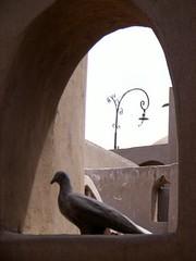 Ceramic dove on a window sill