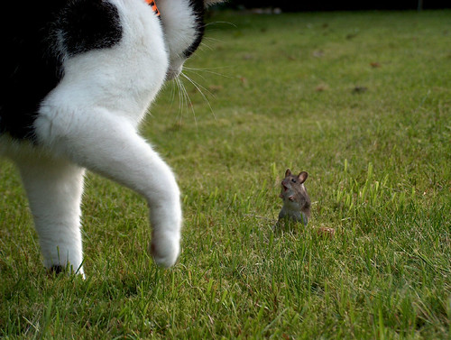 cats nature animal cat ilovenature mouse paula cloud9 c9 cloudnine 100000views topvaforitedbyflickr hp850 anawesomeshot flickrdiamond 1000commentsfaves