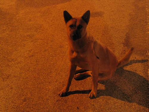 Hello Doggie
