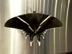 Moth on Pillar