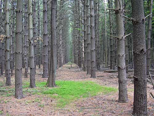 15fav geotagged nj pines rancocas westampton geo:lat=400 geo:lon=7482038
