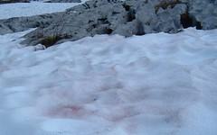 Pink Snow - 50