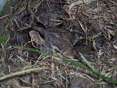 After Mama Rabbit Ran Off