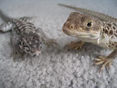 Ollie and Sprinkles