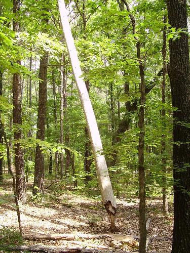 arkansas fairfieldbay nature trail forest tree