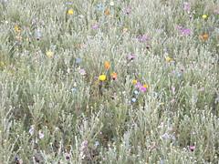Blumenwiese auf der BUGA