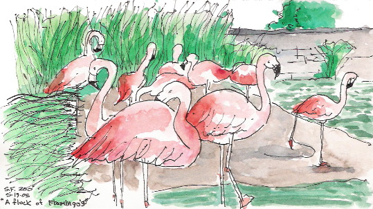 050607-sk18 flamingos