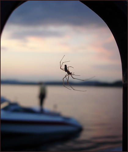 Araignée-du-soir-II
