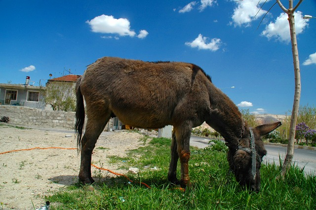 Lovely donkey.