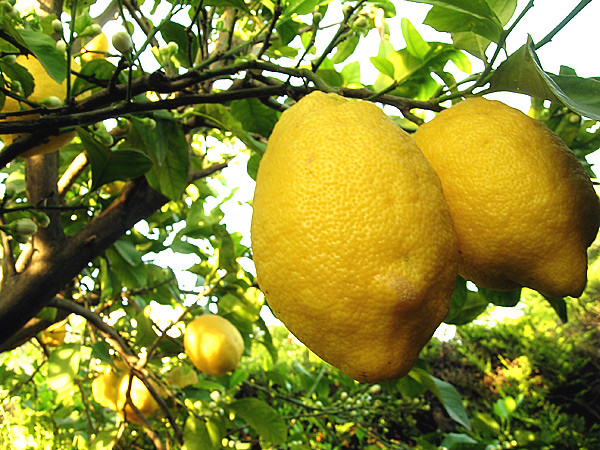 limoni | cirox | Flickr
