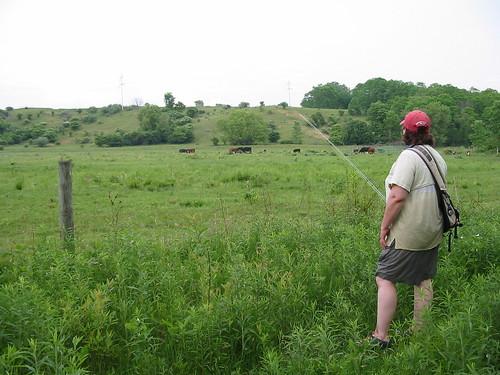 'Secret Creek' pasture