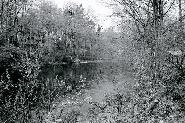 Wychwood Park Pond 02