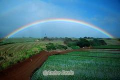 Arco-íris no Havaí