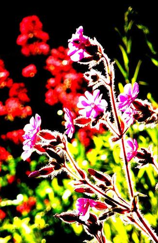 FlowerBackLit