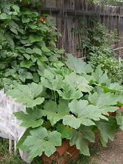 My veggie garden