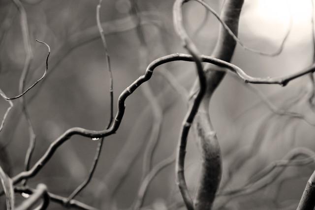 branches duotone
