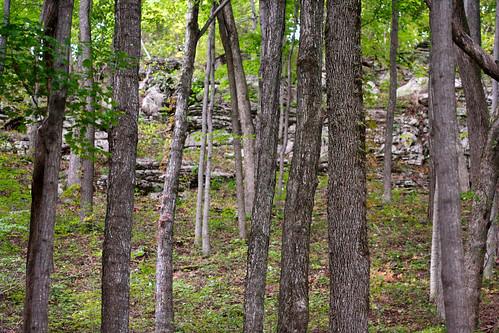 trees landscape rocks kentucky 100mm berea indianfortmountain