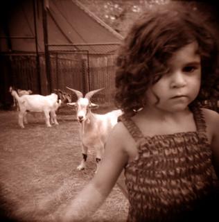 sadie goat arm fade | by Laura Burlton - www.lauraburlton.com