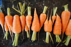 Baby Carrots | by ilovebutter
