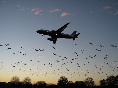 sunset wallpaper sky birds airplane landscape fly wings flight landing birdsinflight takeoff spselection