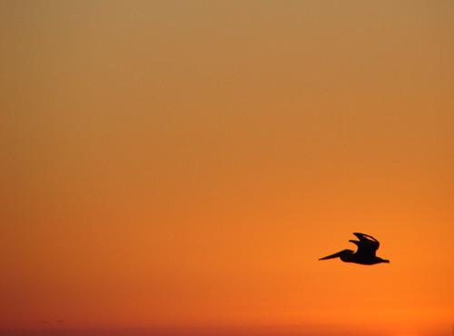 california sunset quality pelican fv5 minimal manhattanbeach dsch1 interestingness32 i500 explore19nov2006