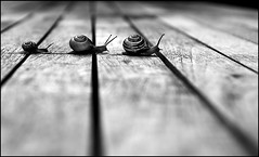 cRosSinG LinES | by Ronaldkoster.com