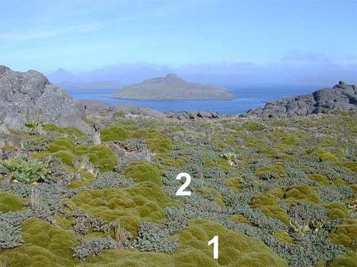 voyage geotagged vegetation kerguelen apiaceae stationalpinejosephfourier geo:lat=49329597 geo:lon=7018753 bassealtitude