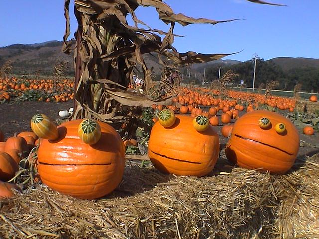 Rupert Pumpkin tm Half Moon Bay Pumpkin Patch 3