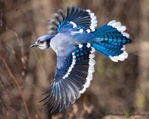 _MG_3593 On the wing | by ~ Michaela Sagatova ~