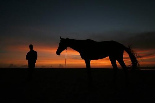 sunset sea horse beach silhouette warm kerala trivandrum southindia horseman thiruvananthapuram premonsoon velibeach