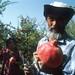 Man in pomegranate field. Tajikistan