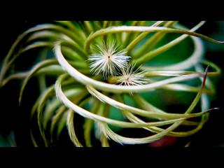 Hurricane Weed? | by Todd Baker << technowannabe