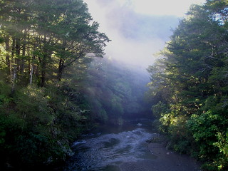 River in the Mist (Kaitoke Regional Park) | by diane_rooney