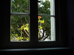 through the window | by deadoll