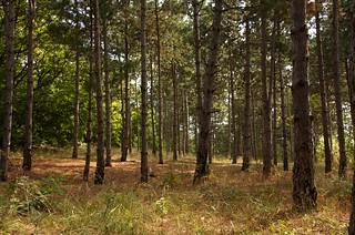 forest | by sashomasho