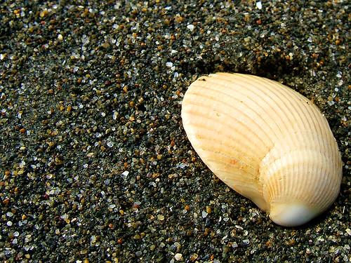 beach sand shell wa washingtonstate coolest oceanshoreswa october2006 saywa experiencewa shesnuckinfuts