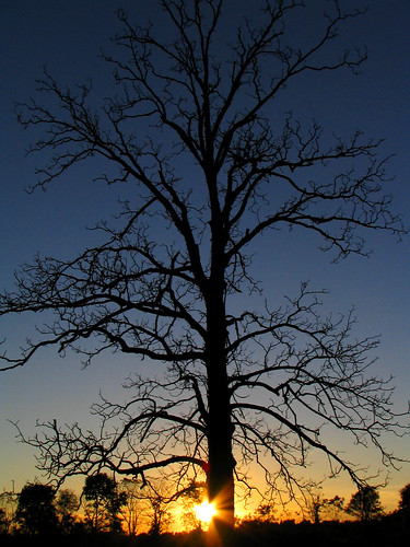 sunset sky sun tree silhouette star twilight indiana lensflare flare sunburst starburst lonelytree canonpowershots1is jeremystockwellpix mop102006