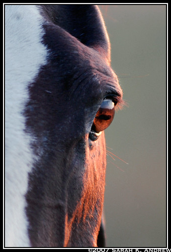 sunset horse eye appaloosa july explore top20horsepix 28 peepers alibar mywinners excellenthorses