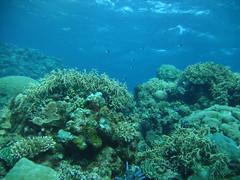 Great Barrier Reef Dive Ten - 1