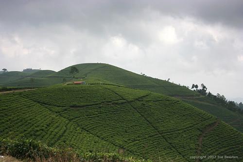 indonesia geotagged java tea plantations kemuning geo:lat=7526893 geo:lon=111035385
