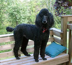 Bailey on a bench | by Gayle Nicholson