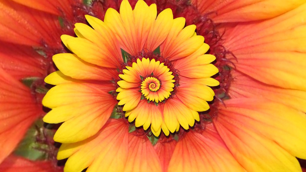 Recursive Blanket Flower