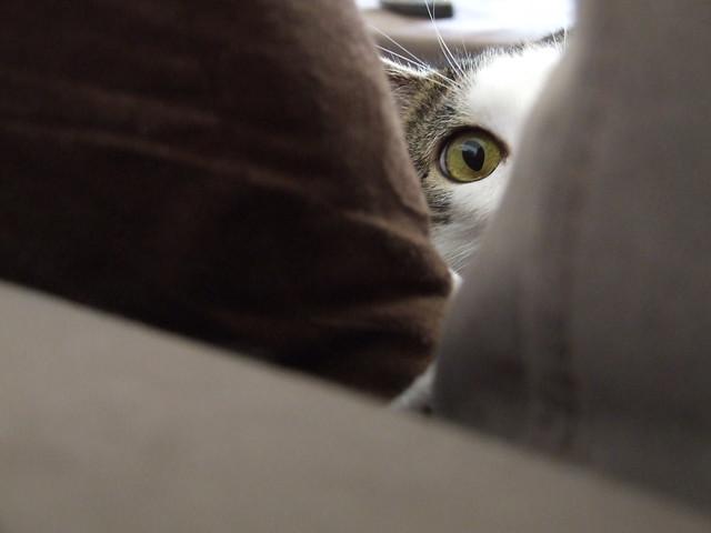 Peek a Foo