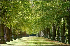 Lime Tree Avenue, Clumber Park, Nottinghamshire | by Lincolnian (Brian)