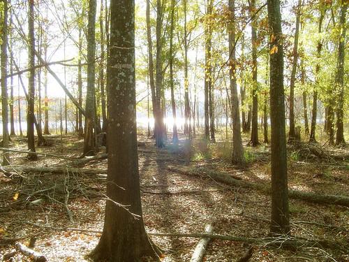 trees sunset lake forest alabama smithlake winstoncounty