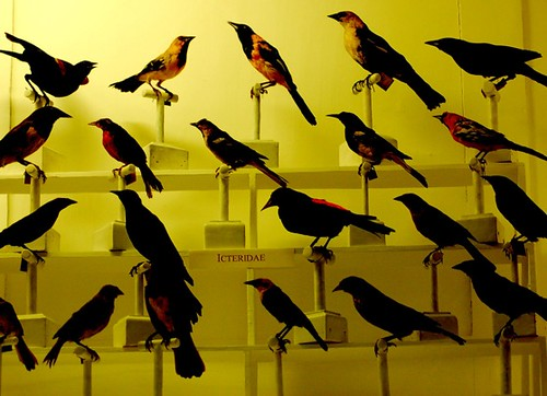 Taxidermied Birds | by Curious Expeditions