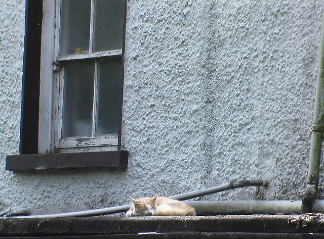 Snowy sleeping on roof